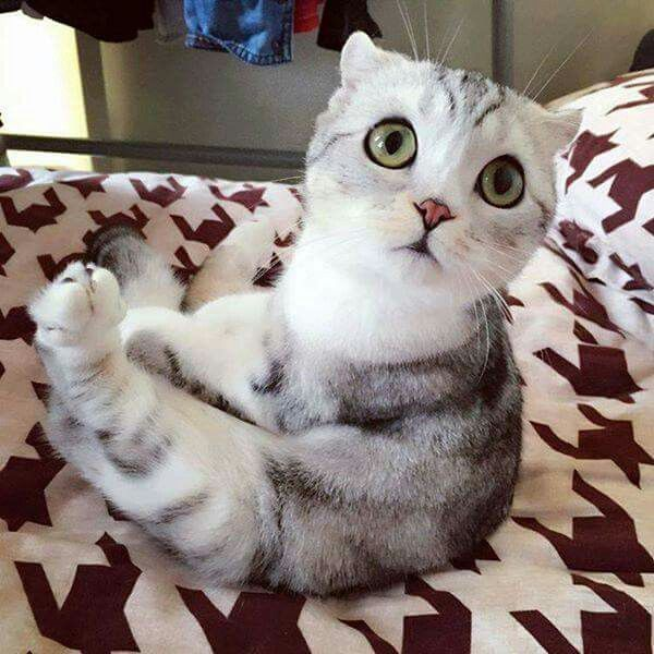 """""""Does my paw look normal to you?!"""" -Concerned Kitty..."""