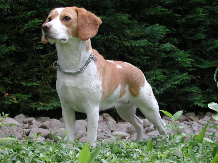 Awas! Makanan Ini Berbahaya Untuk Anjing Kita ~ Tips Info Cara