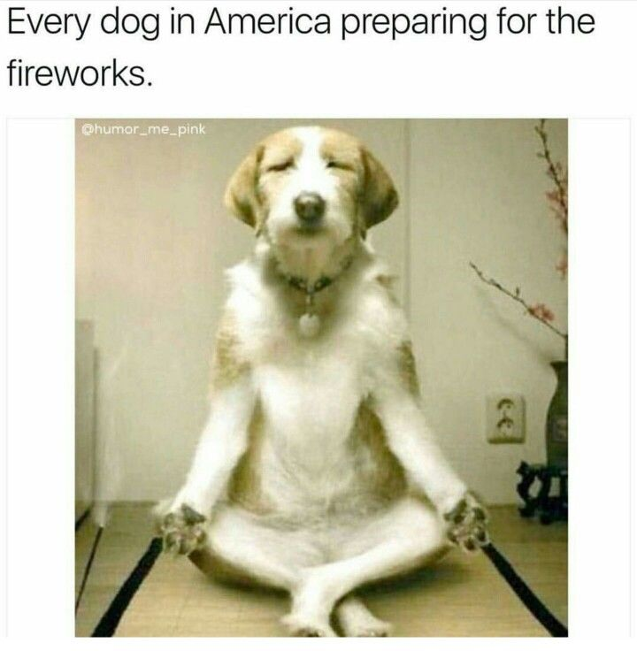 True!!!!! I think I accidentally scarred my dog for life bc this was her fist time in a America for Fourth of July (bc we got her in Costa Rica) and I forgot they hated fireworks....