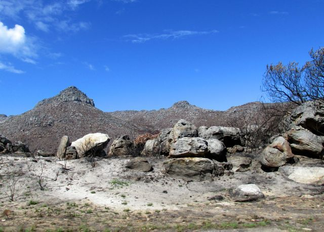 after the fire, Silvermine CapeTown