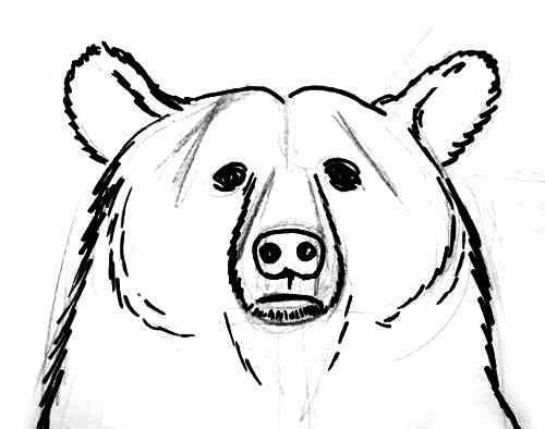 Line Drawing Of Bear Face : Best pencil drawings images on pinterest art