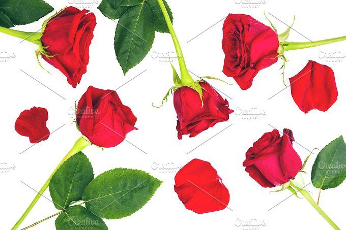 Red roses and petals by etorres69 on @creativemarket