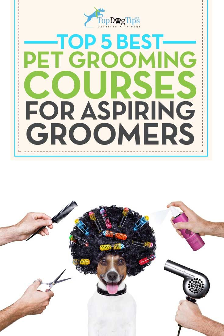 "Best Dog Grooming Courses Online. Do you groom your own dogs, or find yourself pulling out the scissors after your dog's trip to the grooming salon to ""get the job done right""? Do your friends and family ask you to trim their dogs' fur because you are so good at it? Have you thought about maybe making this talent a side hustle, or even a full time business? These best dog grooming courses online can help get you started! #dogs #grooming #pets"