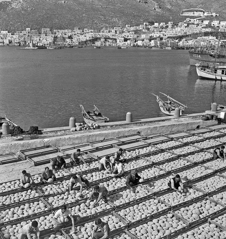1950 ~ Sea sponges drying in the sun, Kalymnos island. Photo by Dimitris Hassidiaris