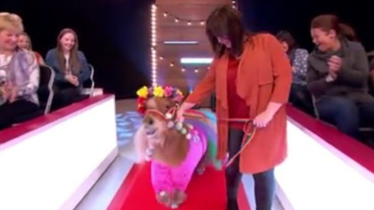 Loose Women Accused Of Animal Abuse As Coleen Nolan Reunites James Cosmo With Tony The Pony (VIDEO)