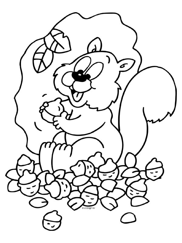 kleurplaat herfst eekhoorn eikels kleurplaten nl