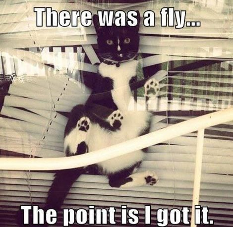 : Animals, Funny Cats, Fly, Pet, Funny Stuff, Funnies, Funny Animal, Kitty