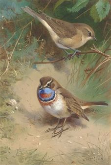 A Garden Warbler and an Arctic Bluethroat By Archibald Thorburn ,1924
