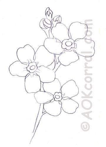 26 best forget me nots images on pinterest drawings forget me forget me not flower pattern ccuart Image collections