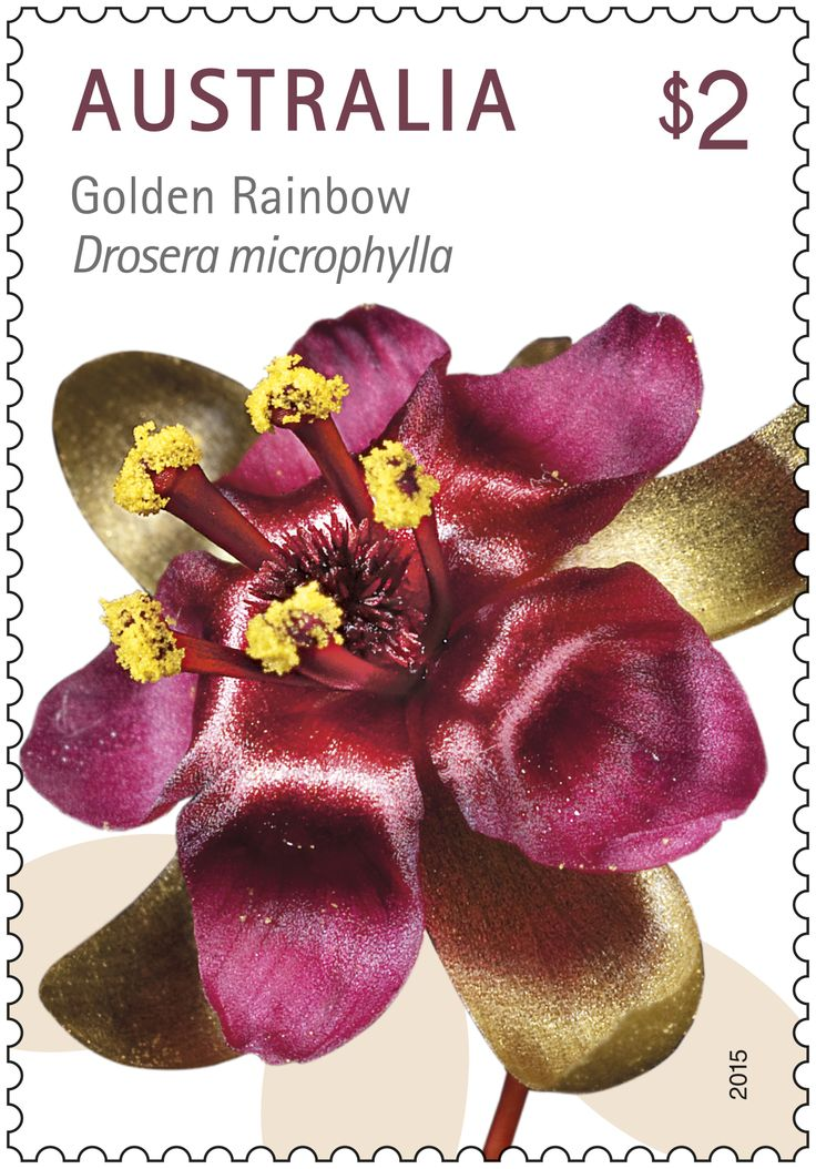 The beautiful Australian wildflower Golden Rainbow is featured on this stamp   #StampCollecting #AustralianStamps #Australianflowers #wildflowers #nativeflowers