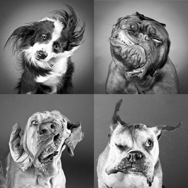 Shake Prints by Carli Davidson - need to have a picture of my dog like this...when I have a dog :(