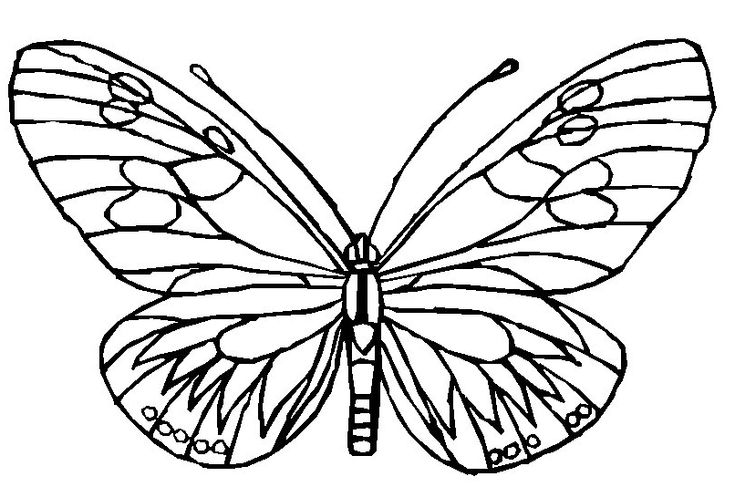 butterflies coloring page, coloring pages to print