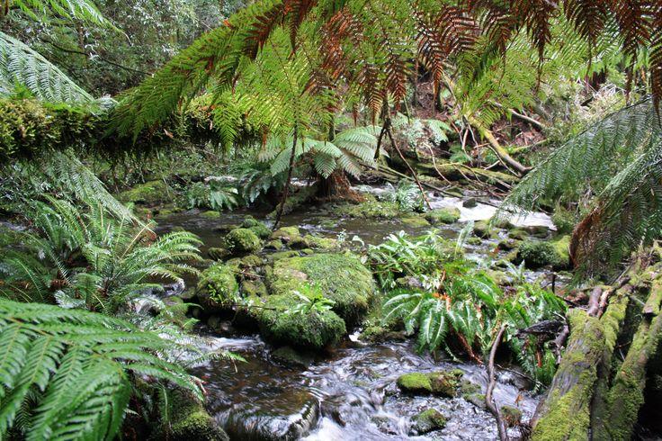 West Coast Tasmania. River at Nelson Falls