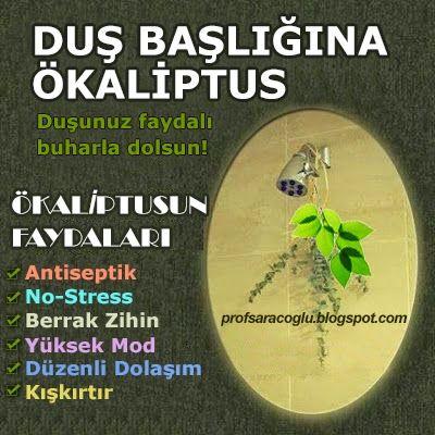 Prof. İbrahim Saracoğlu Bitkisel Kürler ve Botanik Çözümler