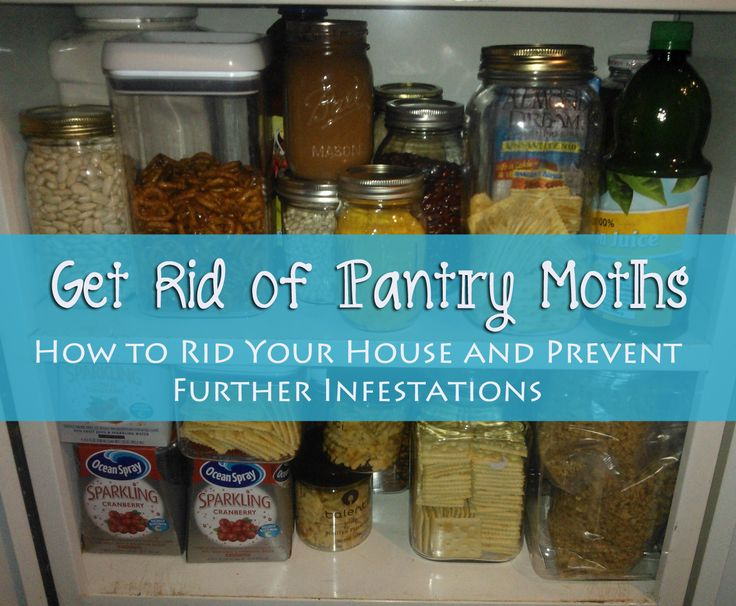 17 best ideas about pantry moths on pinterest clean for Ant infestation in kitchen cabinets