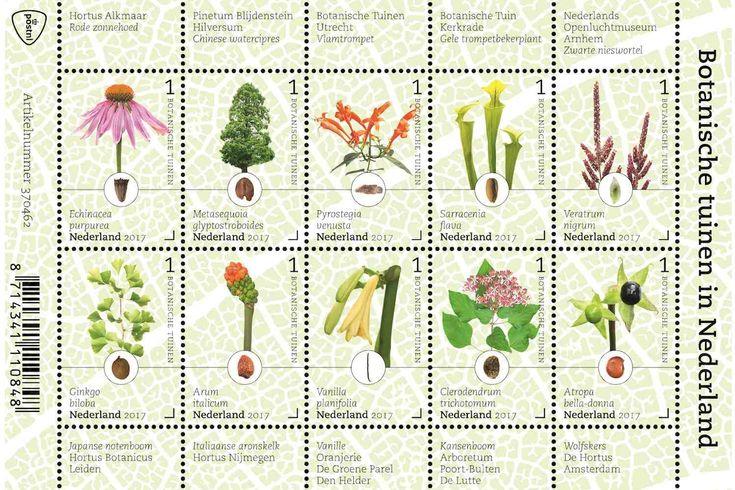 DEN HAAG - Ter gelegenheid van het Jaar van de Botanische Tuinen in 2017 geeft PostNL nieuwe postzegels uit. Tien bijzondere planten en bomen staan op de zegels afgebeeld. Deze kroonjuwelen zijn alle afkomstig uit botanische tuinen in Nederland.  Nederland kent ruim dertig botanische tuinen. Vierentwintig daarvan zijn aangesloten bij de Nederlandse Vereniging van Botanische