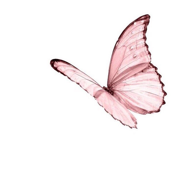 Pink butterfly | Pink aesthetic