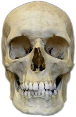 best 20+ human skull anatomy ideas on pinterest | skull anatomy, Skeleton