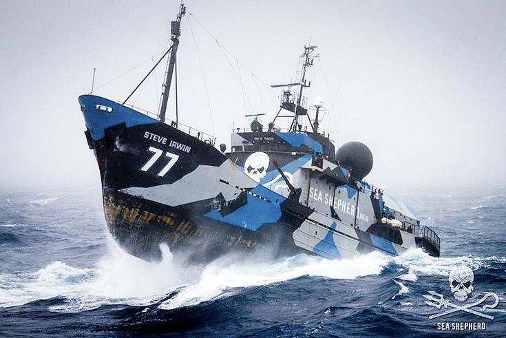 The whalers expanded their hunting grounds in the Southern Ocean to make it difficult for the environmentalists to intercept them.