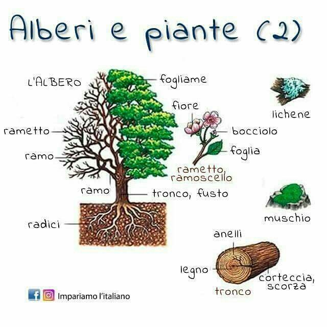 Plants. Trees. Italian.