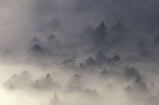 Metzeral (forêts alsaciennes) : 14 photos de Vincent Munier