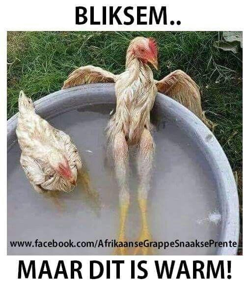 #warm #weer #afrikaans #grappe #grap #snaaks #humour #lol