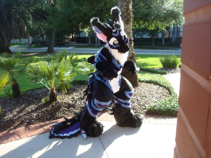 21 Best Animals Images On Pinterest Furry Art Fursuit And Animals