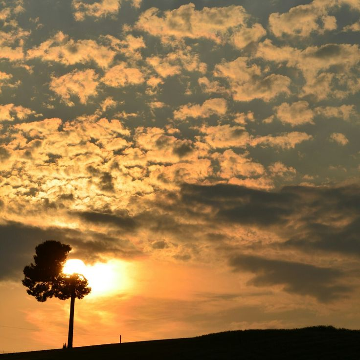 #broken #tree #sunset #nature #Italian #landscape
