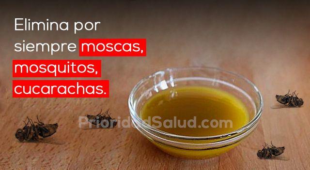 Si no tienes tienes el tiempo ni el deseo para estar limpiar las 24 horas, tampoco debas dejar que las cucarachas, moscas y mosquitos se adueñen de tu casa.\r\n\r\n\r\n\r\nAunque esos insectos, además de antihigiénicos, son difíciles exterminar, ya que se multiplican bastante rápido: las cucarachas resisten hasta las bombas atómicas.\r\n\r\n[ad]\r\n\r\nAunque existen insecticidas, las fumigaciones son bastante caras y sus resultados no son permanentes, sin contar los contaminantes tóxicas…
