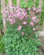 Цветы. Саженцы. Семена Цветов   : фотографии Цветы / макро