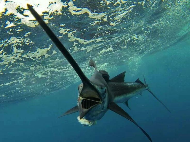 1810 best saltwater fishing images on pinterest for Best fishing spots in the keys