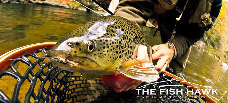 Sage fly fishing school the fish hawk for Sage fly fish
