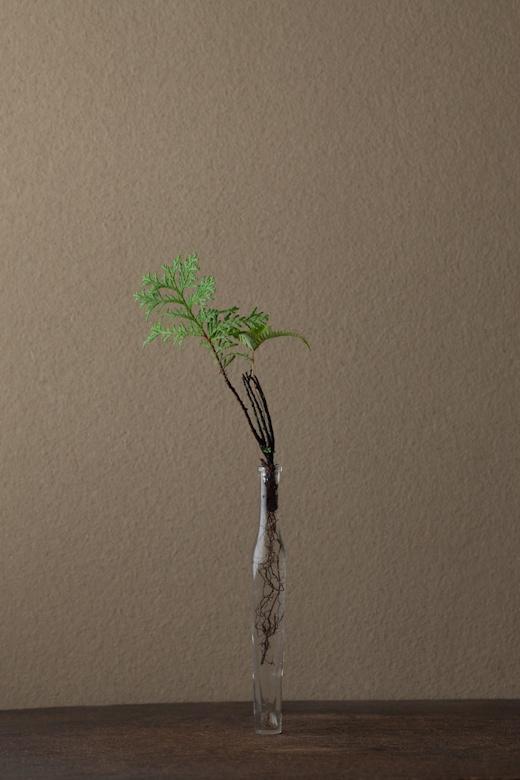 2012年1月31日(火)    檜の折れた枝先が見事。アフリカの布の文様のようです。  花=檜(ヒノキ)、山羊歯(ヤマシダ)  器=古ガラス細瓶(20世紀)