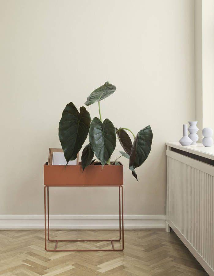 182 best Plantes d\'intérieur - House Plant images on Pinterest ...