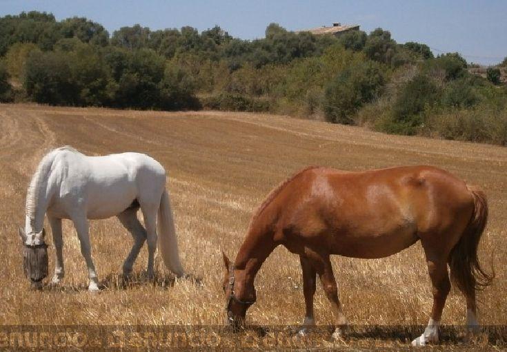vendo dos yeguas /caballos