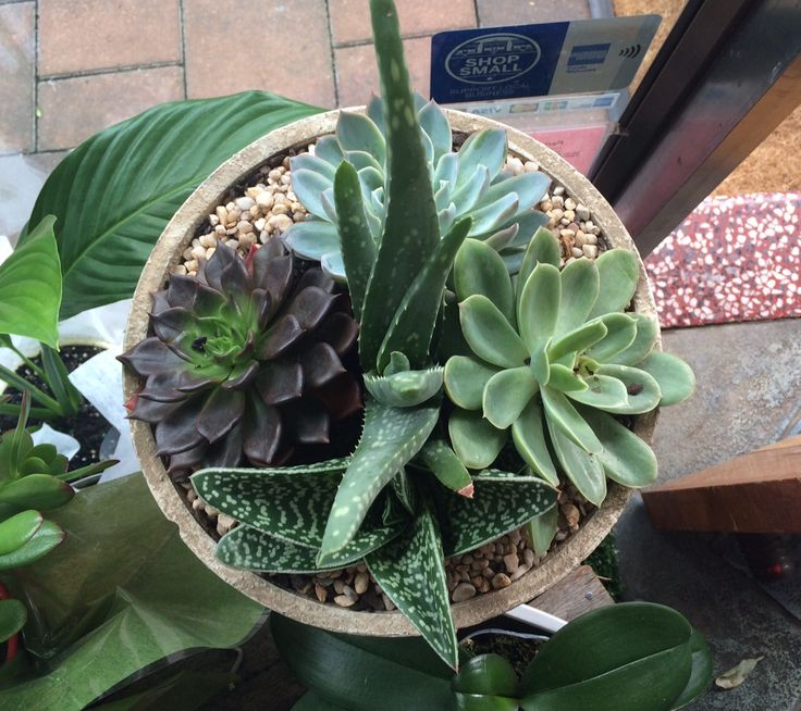 Our beautiful concrete pots filled with different succulents are the ideal gift. Succulents are a perfect plant that will require minimum care. They love a small amount of water once per week and will last and last. #mothersday #mothersday2015 #succulents #mothersdaygifts