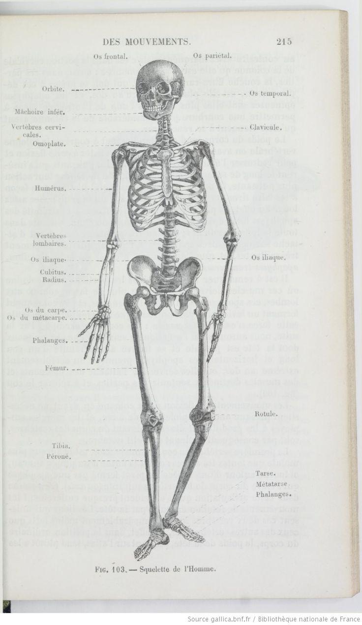 Beste Philip Stubbes Anatomie Des Missbrauchs Ideen - Menschliche ...