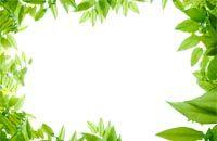 Lenagold - Клипарт - Рамки с плодами и листьями - 1