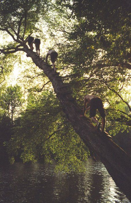 Climbing Trees - Our parents don't like us climbing trees but when the fruit is ripe for picking we have an excuse to climb all the way to the top.