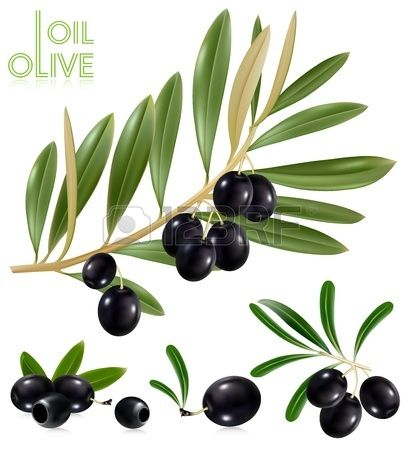 Photo-realistic vector illustration. Black olives with leaves.