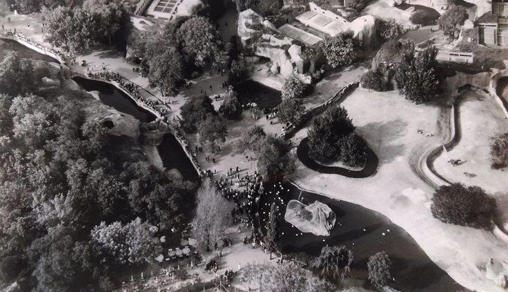 """ANCIENNE PHOTO AÉRIENNE de ROGER HENRARD 1955  """" ZOO de VINCENNES """""""