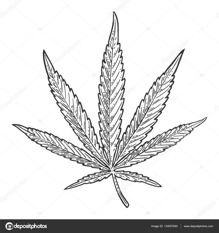 Resultado de imagen para hojas de marihuanas para dibujar