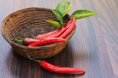 Красный перец в небольшой корзине stock photo