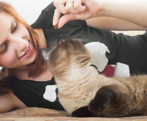 Suche #karmy Applaws dla kotów