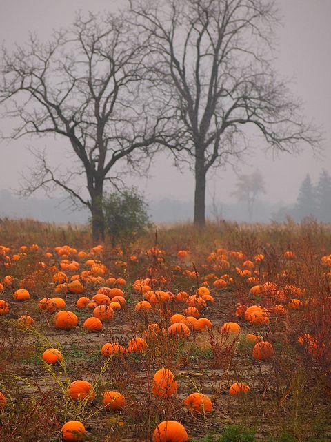 pumpkin patch by pesbo, via Flickr