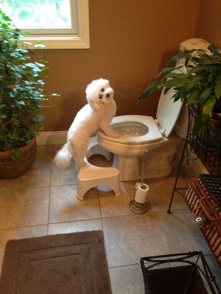 25 Best Ideas About Squatty Potty On Pinterest Pee Pee