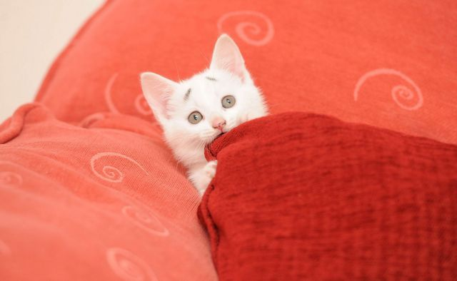 Toti incep sa rada cand vad acest pui de pisica! Uite ce detaliu ascunde fruntea lui. E 100% real | Kanal D