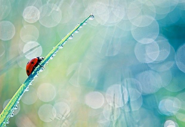 ladybug03