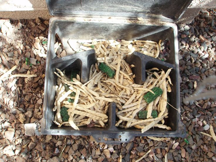 How To Get Rid Of Pack Rats In Saddlebrooke 07 09 12 From