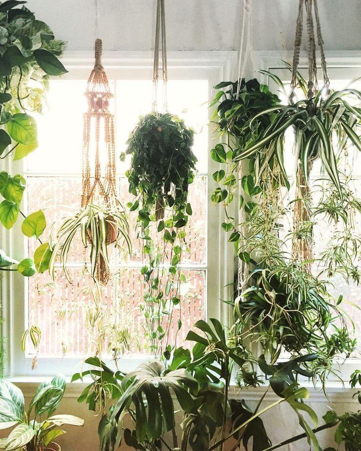 25+ Best Ideas About Hanging Plants On Pinterest